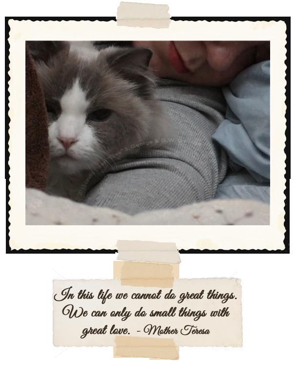 Yeti-the-Cat-Nursemaid