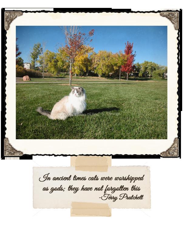 Yeti-the-Cat-Vain-Autumn